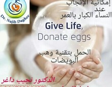 Egg donation, Egg donation in Lebanon